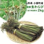 わらび 山菜 5月下旬頃から発送・山形県小国町産新鮮生わらび 2kg