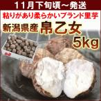 里芋 11月上旬頃から発送・新潟県五泉市産里いも「帛乙女(きぬおとめ)」 5kg 送料込