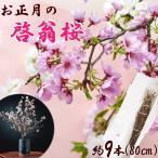 はな 山形県産桜 啓翁桜  80cm 8 10本