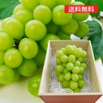 【旬果】山形の特選ぶどうシャインマスカット超特大1房[700g以上]桐箱入