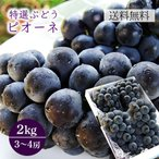 特選ぶどうピオーネ約2kg(3〜4房程度)