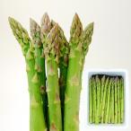 芦笋 - 極太アスパラ[2L・1kg]【7月中旬頃より発送】
