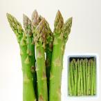 芦笋 - 極太アスパラ[2L・2kg]【7月中旬頃より発送】