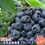 完熟 大粒 ブルーベリー 生700g(350g×2)山形県産 無農薬