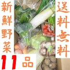 山口・九州産【送料無料】 『新鮮野菜の詰め合わせ11種類』(小松菜・白ねぎ・なす・きゅうり・大根他)