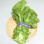 山口県産『高菜(タカナ)』【野菜詰め合わせセット同梱で送料無料】