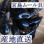 【広島直送】広島湾産「天然 活きムール貝 1kg(宮島ムール)」