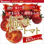 リピート間違いなし! 青森県産 【極味(ごくみ)トマト】約1kg入 1箱 送料無料【冷蔵便】