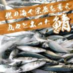 常磐もの・鮮魚・生さば・生サバ  5kg ※水揚げ次第発送(1尾あたり600g〜700gが7〜8尾)