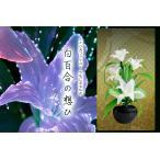 グランドルミナス 白リリー 白百合の想ひ LED r3854 花 供花 造花 生け花フラワーライト モダン仏壇に