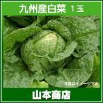 白菜 1玉 九州産