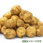 長崎県産馬齢1kg