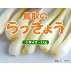 鳥取県産 らっきょう Sサイズ 1kg