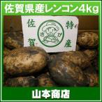 【送料無料】佐賀レンコン 4kg