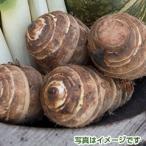 九州産 セレベス 1kg