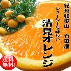 訳あり清見オレンジ5kg【送料無料】【わけあり】【3月上旬より順次発送】【有田産清見タンゴール】