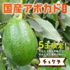 【5玉限定!】横山果樹園の「チョケテ(国産アボカド)1玉」ギフト箱入り