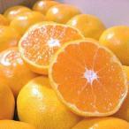 橘子 - 和歌山産の温州みかん/ちょっとだけ訳あり 10kg ワンランク上の訳アリみかん