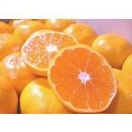 橘子 - 和歌山産 温州みかん/ワンランク上の訳アリみかん 3.5kg ちょっと訳あり・ご家庭用