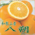 八朔 - 和歌山産 美味しい はっさく(八朔)/訳あり・ご家庭用 5kg