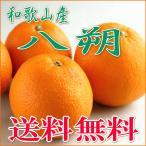 八朔 - 和歌山産の美味しい八朔(はっさく) 3L/4L 10kg