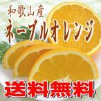 和歌山産 ネーブルオレンジ/訳あり・家庭用 5.5kg めずらしい国産オレンジ