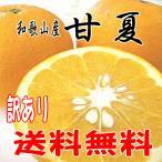 【送料無料】 和歌山産 甘夏(あまなつ)訳あり ご家庭用 3kg お試し用