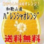 【送料無料】訳あり/バレンシアオレンジ 2.5kg めずらしい国産オレンジです(和歌山産)