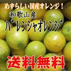 (送料無料】和歌山産 バレンシアオレンジ M/Lサイズ 5kg めずらしい国産オレンジです
