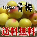 完熟青梅(南高梅)2L・3Lサイズ 3kg  和歌山産/梅干し用 【送料無料】