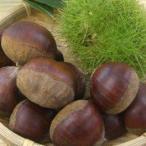 其它 - 和歌山産の採りたて生栗 大粒2kg / クリ・くり
