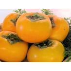 和歌山産 たねなし柿 2Lサイズ 11個(2.5kg)【送料無料】