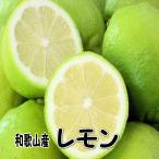 【送料無料】国産(和歌山県産)レモン/グリーンレモン 5kg 訳あり ノーワックス