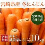 yaoyamato_10001101