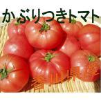 トマト 化学肥料を使用していない  かぶりつきトマト 香川県産  3個 セット