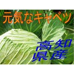 キャベツ 高知県産 元気なキャベツ 1玉 250円