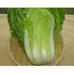 香川県産 無農薬の白菜いっぺん食べてんまい 410円