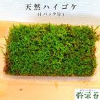苔 苔玉 テラリウム 盆栽 【 天然 ハイゴケ 】1パック分 観葉植物 園芸
