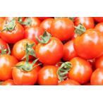 とくちゃんのミニトマト1.5kg(S�Lサイズ)バラ詰