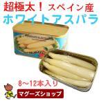 極太 ホワイトアスパラ 缶/缶詰 スペイン産高級アスパラガス 780g(固形量500g) (8〜12本)