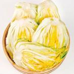 【冷蔵】★予約制・牛舞・塩漬け白菜・5kg