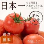 ショッピングトマト トマト 約2kg 安心安全 農家直販  ハウス桃太郎トマト ヨダファーム 注文から10日以内に採れたてを発送