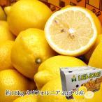 レモン カリフォルニア産又は チリ産 15kg 個数(95、115、140、165)