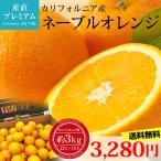 ネーブルオレンジ 約3kg 12〜15玉 アメリカ