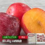 プラム 貴陽 秀品 約1.5kg 7〜9玉 500ケース限定 山梨県