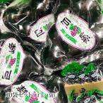 ゼリー 巨峰ひとくち玉ゼリー 20袋セット(11玉/1袋)