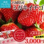 いちご ミガキイチゴ レギュラー 2パック(2パック/1箱) 宮城県