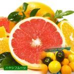 プレミアムフルーツセレクション グレープフルーツ オレンジ アボカド