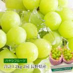 ぶどう シャインマスカット 約1.2kg(約600g×2房) プレミアムフルーツセレクション 長野県産
