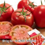 フルーツトマト 高糖度 トマト アメーラ 秀品 敬老の日 ギフト お取り寄せグルメ 約1kg M~2S 12-20個 送料無料